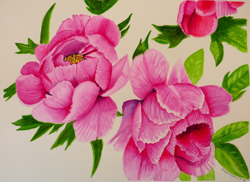 Peonies for Mom and Dad 31MAY2018
